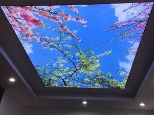 Tranh dán tường xuyên sáng Hoa và Bầu trời xanh